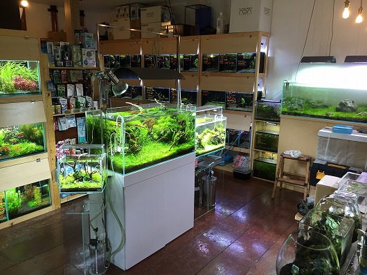 kbo aquarium shop breath カミハタビジネスオンライン