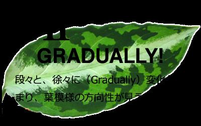 G2説明 段々と、徐々に(Gradually)変化が始まり、葉模様の方向性が見えてきた姿。