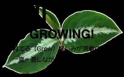 G3説明 育てる(Grow)楽しみが満載の姿。一喜一憂しながらピクタムを楽しもう。