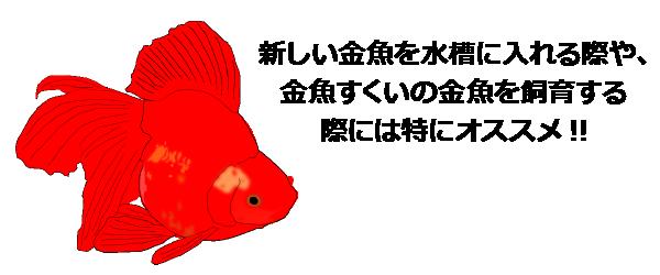 新しい金魚を水槽に入れる際や、金魚すくいの金魚を飼育する際には特にオススメ!!